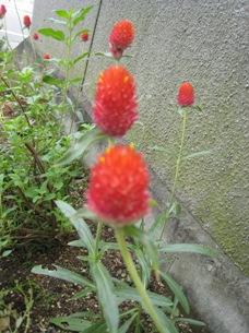 20080925-0925.jpg